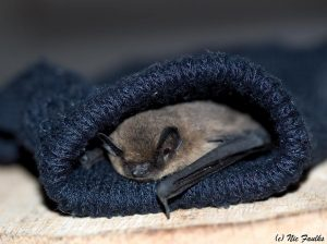Bat in a glove
