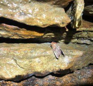 Moth in the Adit